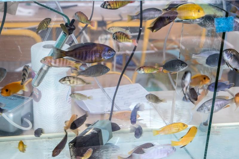2ème bourse aux poissons de l'association Lille Aquariophile Club - Page 2 24042088