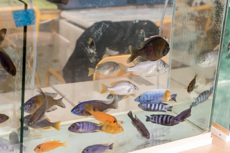 2ème bourse aux poissons de l'association Lille Aquariophile Club - Page 2 24042090