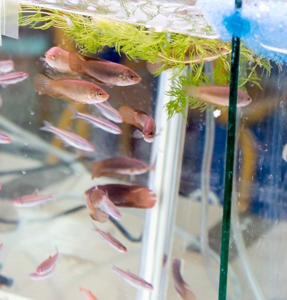 2ème bourse aux poissons de l'association Lille Aquariophile Club - Page 2 24042092