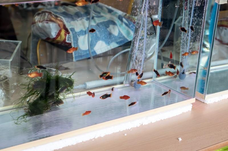 2ème bourse aux poissons de l'association Lille Aquariophile Club - Page 2 24042093