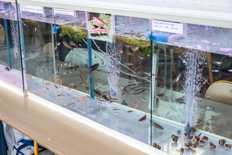 2ème bourse aux poissons de l'association Lille Aquariophile Club - Page 2 24042095