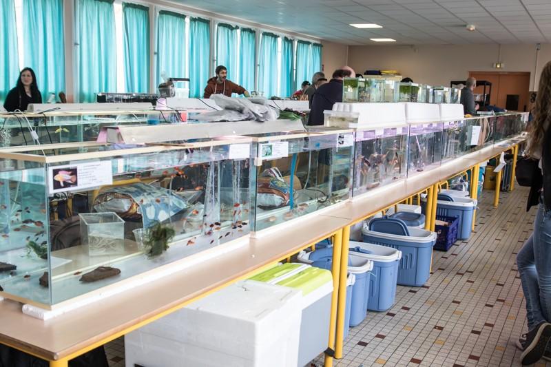 2ème bourse aux poissons de l'association Lille Aquariophile Club - Page 2 24042096