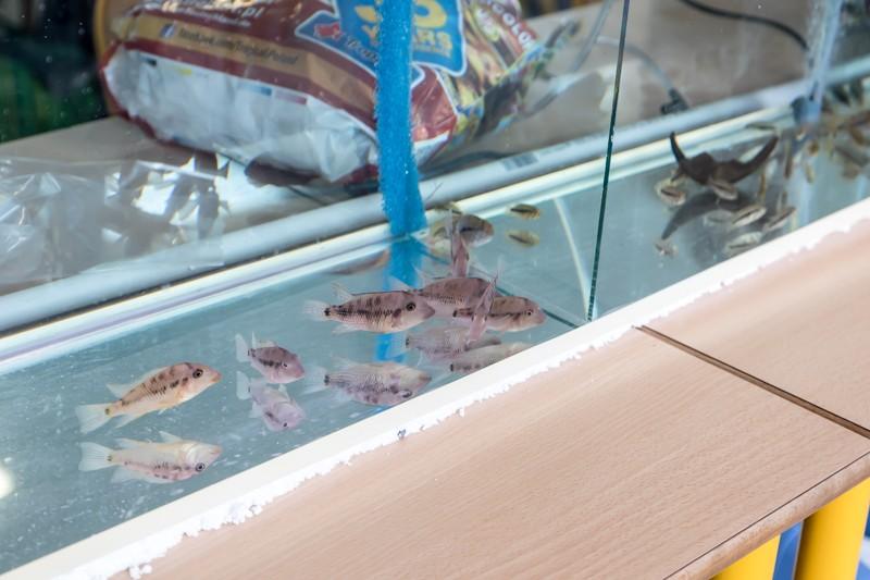 2ème bourse aux poissons de l'association Lille Aquariophile Club - Page 2 24042097