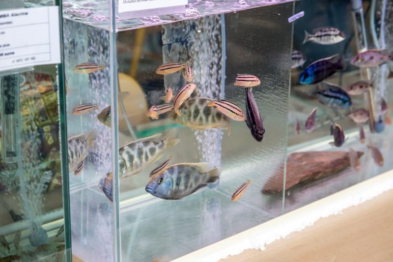 2ème bourse aux poissons de l'association Lille Aquariophile Club - Page 2 24042098
