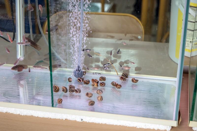 2ème bourse aux poissons de l'association Lille Aquariophile Club - Page 2 24042099