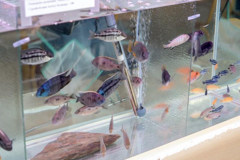 2ème bourse aux poissons de l'association Lille Aquariophile Club - Page 2 24042100