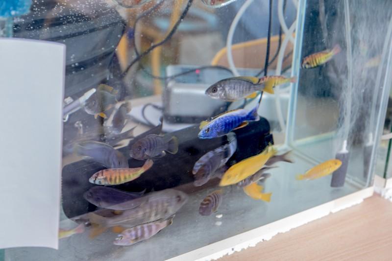 2ème bourse aux poissons de l'association Lille Aquariophile Club - Page 2 24042101