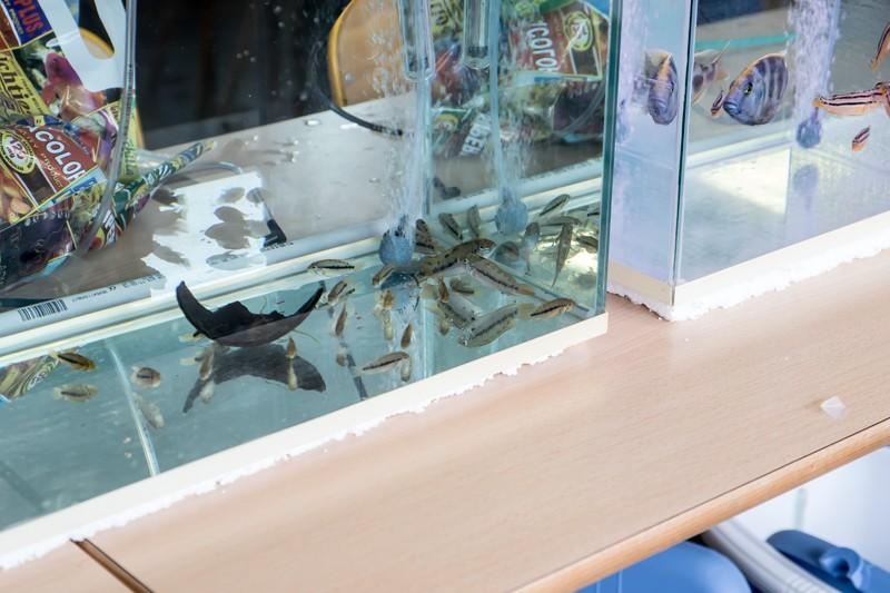 2ème bourse aux poissons de l'association Lille Aquariophile Club - Page 2 24042102