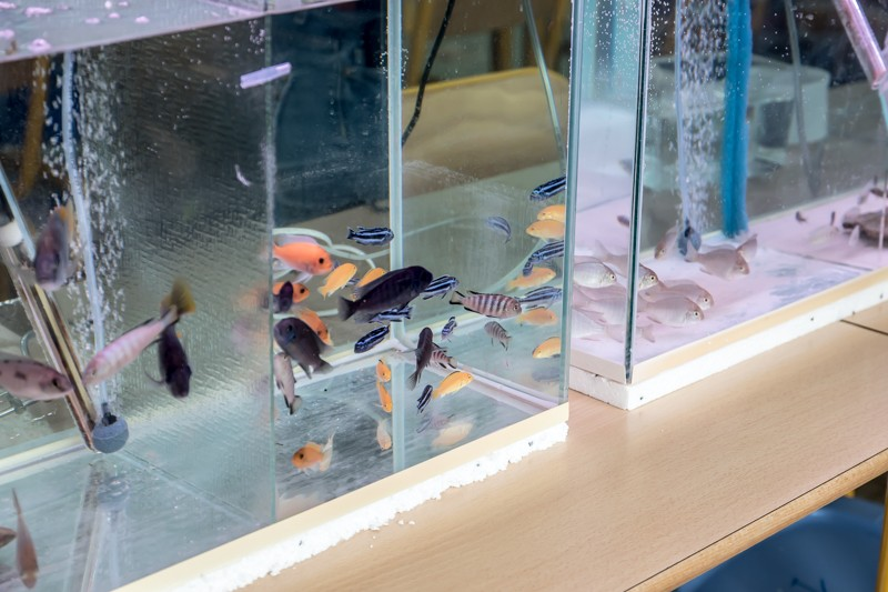 2ème bourse aux poissons de l'association Lille Aquariophile Club - Page 2 24042103