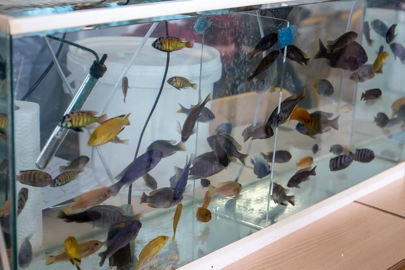 2ème bourse aux poissons de l'association Lille Aquariophile Club - Page 2 24042104