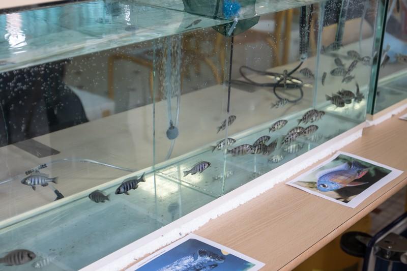 2ème bourse aux poissons de l'association Lille Aquariophile Club - Page 2 24042107