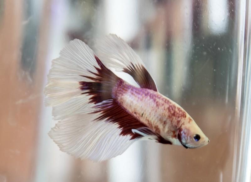 2ème bourse aux poissons de l'association Lille Aquariophile Club - Page 2 24042109