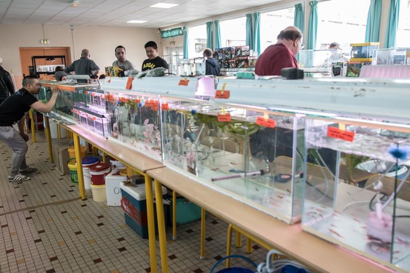 2ème bourse aux poissons de l'association Lille Aquariophile Club - Page 2 24042110