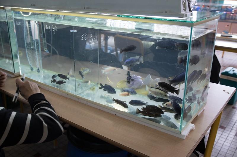 2ème bourse aux poissons de l'association Lille Aquariophile Club - Page 2 24042112