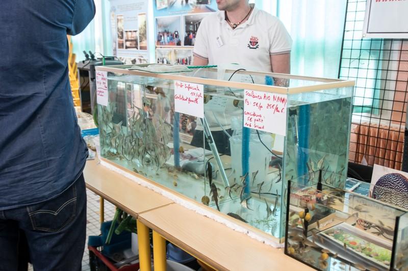 2ème bourse aux poissons de l'association Lille Aquariophile Club - Page 2 24042113