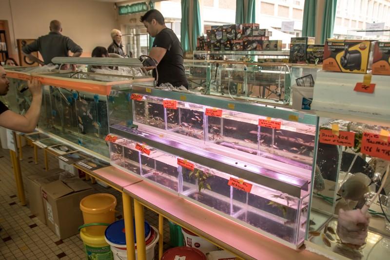 2ème bourse aux poissons de l'association Lille Aquariophile Club - Page 2 24042114