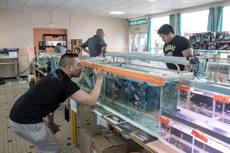 2ème bourse aux poissons de l'association Lille Aquariophile Club - Page 2 24042117