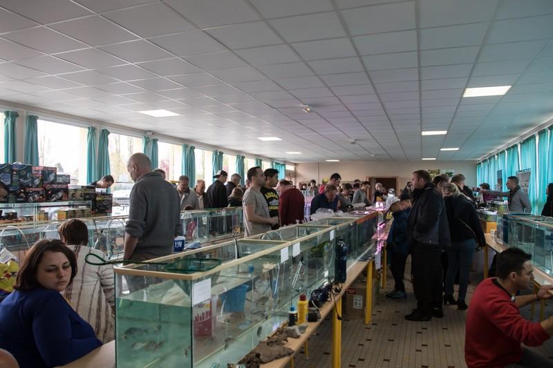 2ème bourse aux poissons de l'association Lille Aquariophile Club - Page 2 24042118