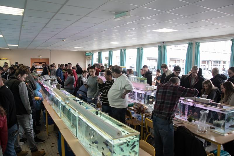 2ème bourse aux poissons de l'association Lille Aquariophile Club - Page 2 24042119
