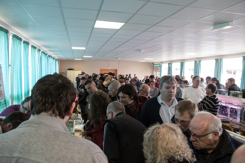 2ème bourse aux poissons de l'association Lille Aquariophile Club - Page 2 24042123