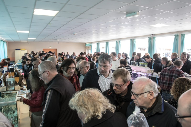 2ème bourse aux poissons de l'association Lille Aquariophile Club - Page 2 24042124