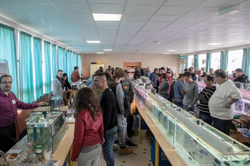 2ème bourse aux poissons de l'association Lille Aquariophile Club - Page 2 24042125