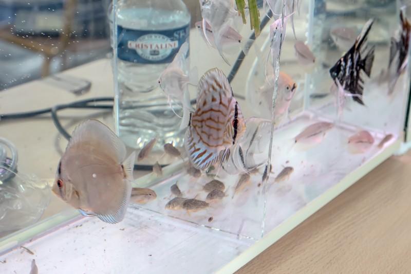 2ème bourse aux poissons de l'association Lille Aquariophile Club - Page 2 24042128