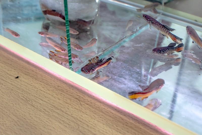 2ème bourse aux poissons de l'association Lille Aquariophile Club - Page 2 24042130