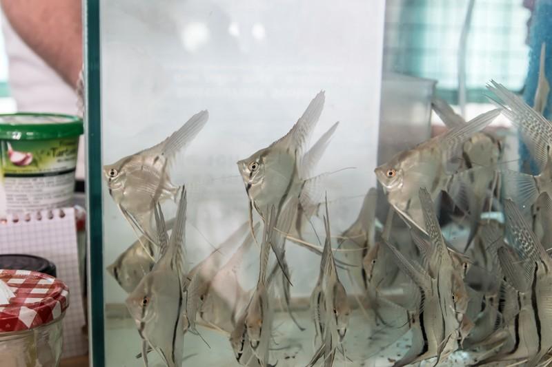 2ème bourse aux poissons de l'association Lille Aquariophile Club - Page 2 24042131