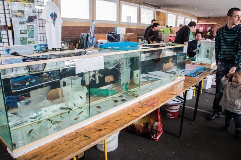 2ème bourse aux poissons de l'association Lille Aquariophile Club - Page 2 24042132