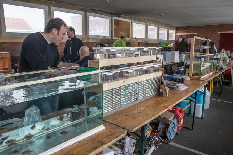 2ème bourse aux poissons de l'association Lille Aquariophile Club - Page 2 24042135
