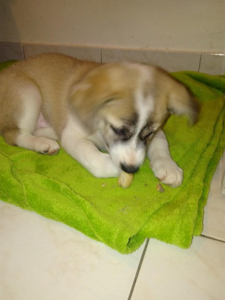 Callie 3 mois 13307311