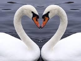 Plaisir dans l'amour