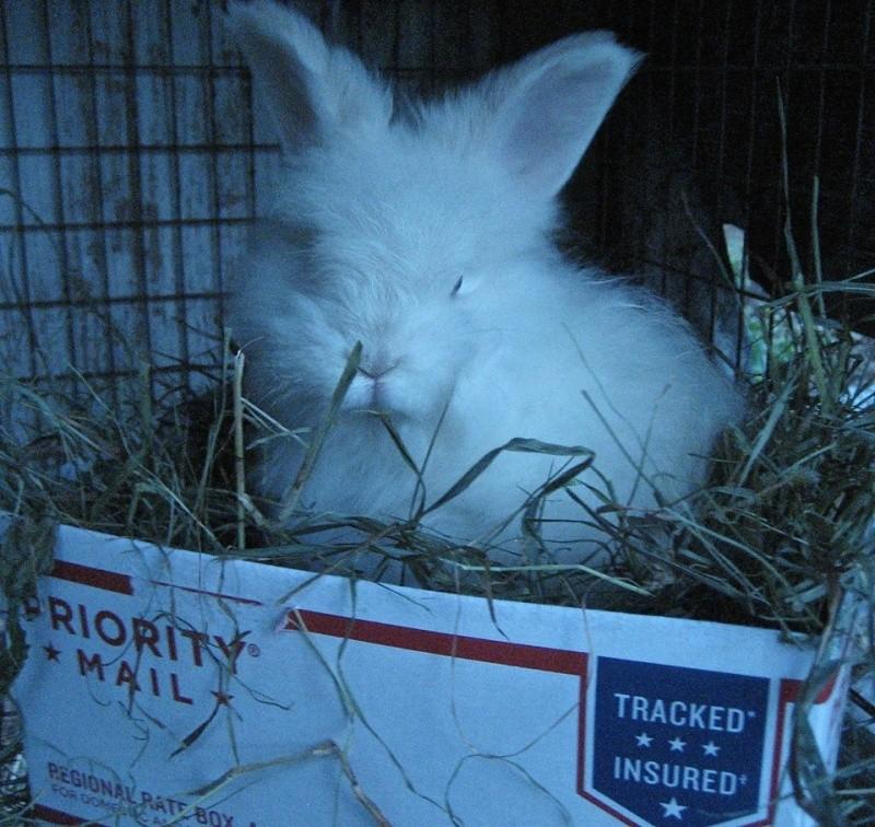 good morning..i think... Bunny10