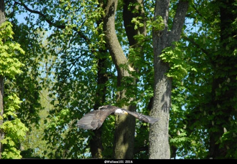 Pairi Daiza par Wallace101 Dsc_0610