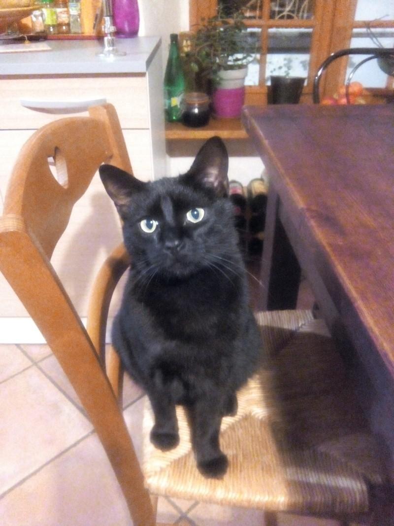 chat noir perdu sur Coudes Img_2011