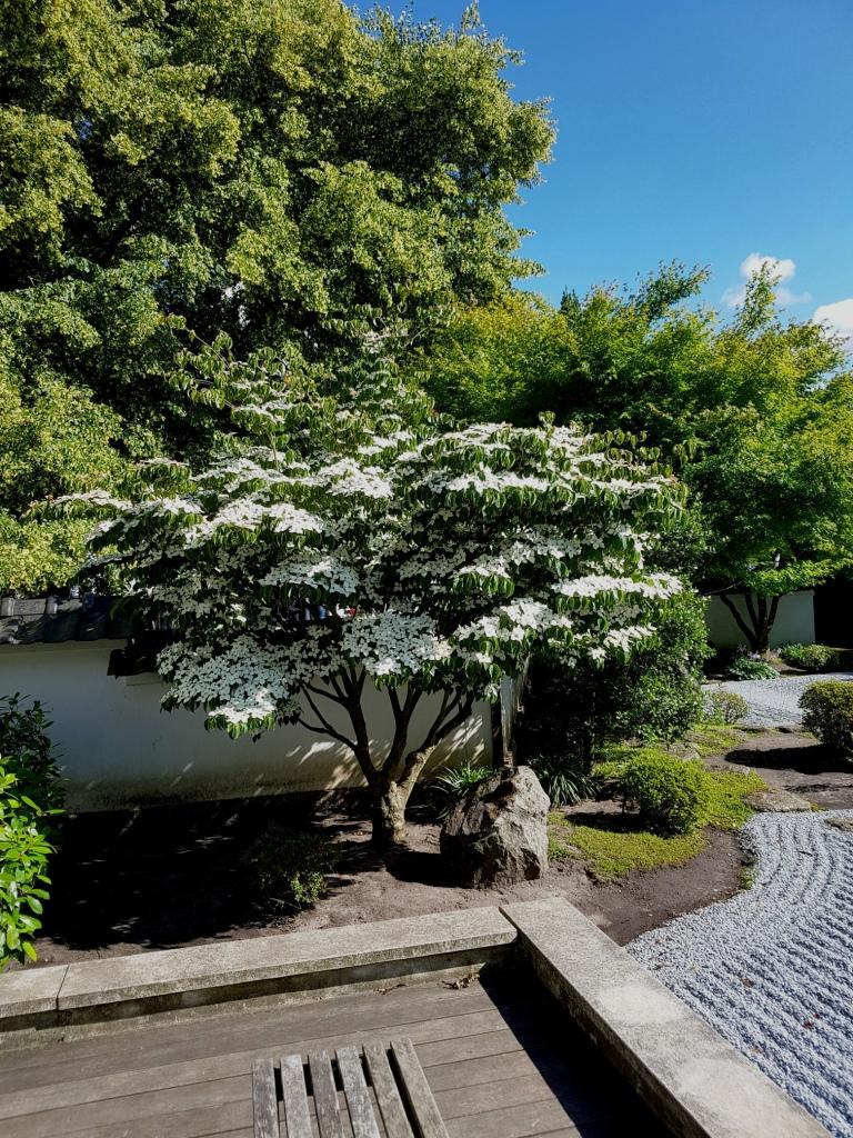 Gärten im Bilde - Seite 9 00610