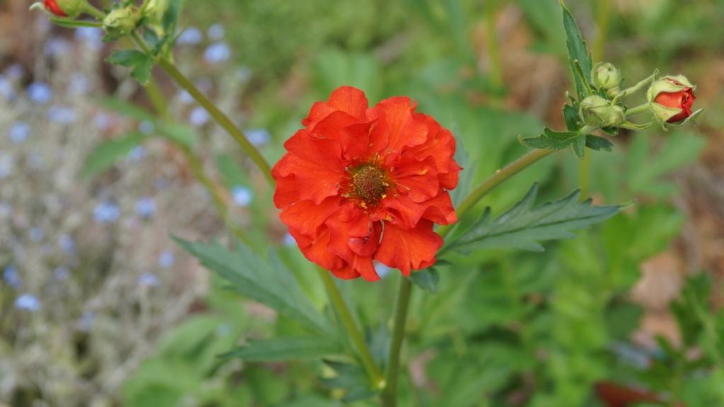 Wildblumen ( Sammelthread) - Seite 21 Dsc00129