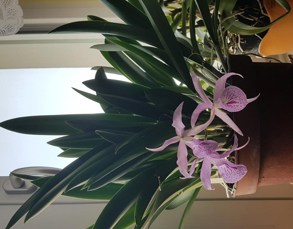 Orchideen 3 (fortlaufende Seiten 300 bis 400) - Seite 74 Maikai12