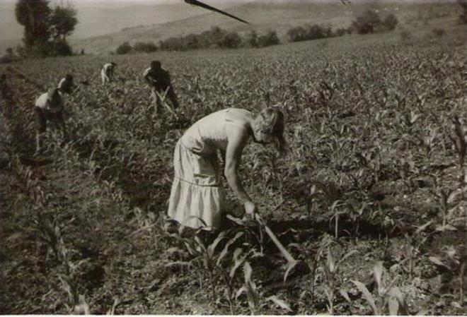 Organska poljoprivreda 13310610