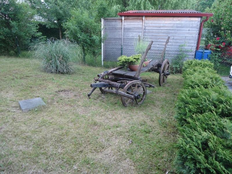 Vrtne biljke                        Dsc03011