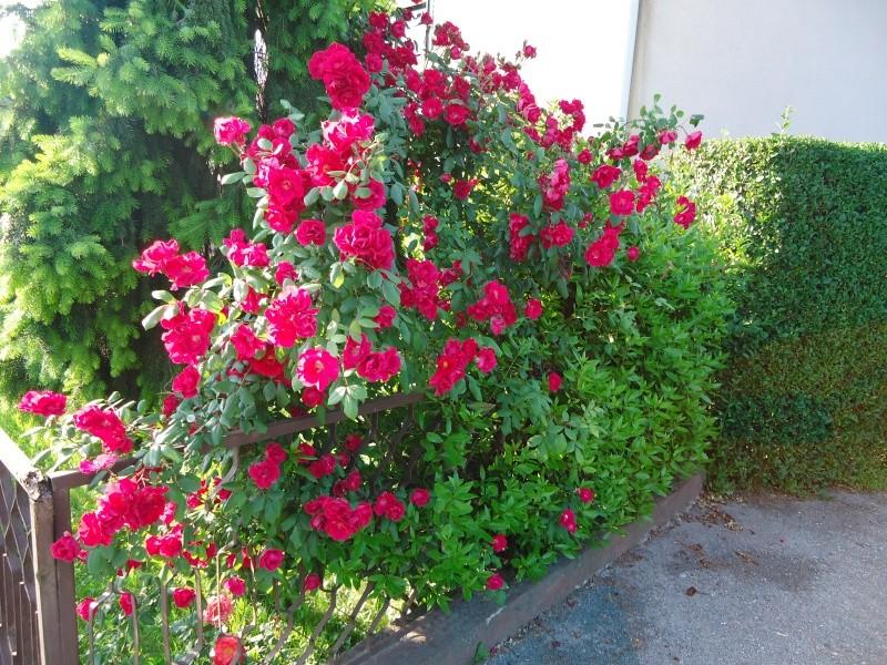 Vrtne biljke                        Dsc03317