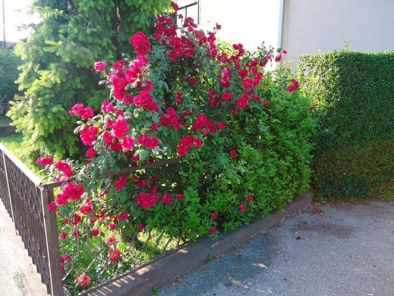 Vrtne biljke                        Dsc03318