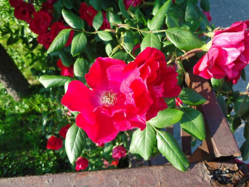Vrtne biljke                        Dsc03319