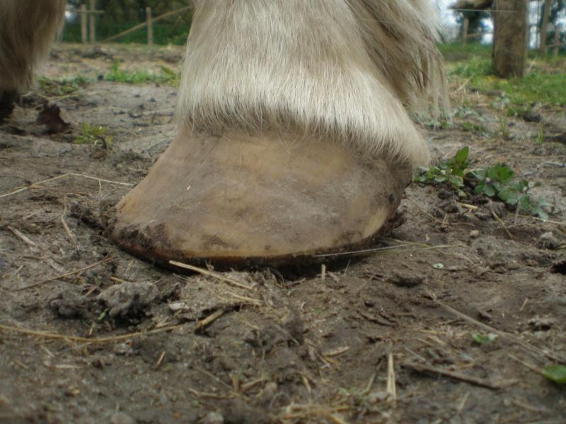 Avis sur mes pieds-nus P4090018