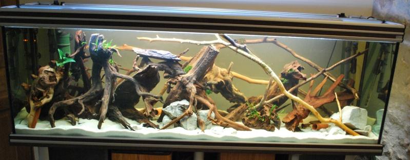 On ne s'ennuis pas en aquariophilie/ aquarium 830 litres  - Page 4 Bac_8310