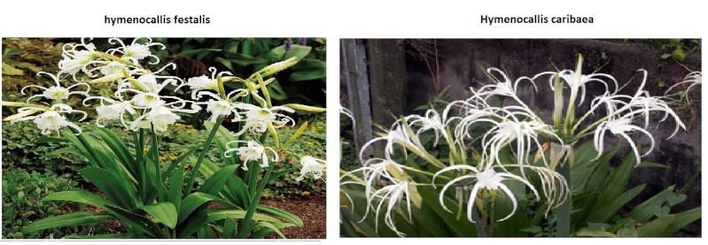 le bassin floral d'été de mes anodonte et moules naine - Page 2 Buhym111