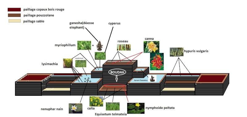 le bassin floral d'été de mes anodonte et moules naine - Page 2 Plant_11