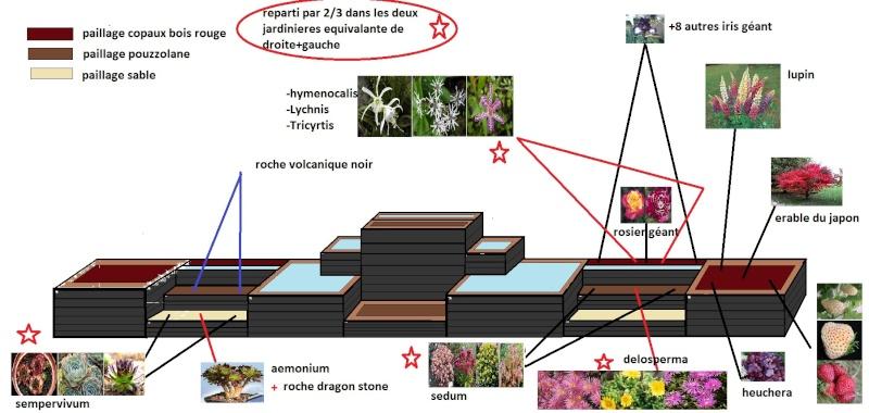 le bassin floral d'été de mes anodonte et moules naine - Page 2 Plant_12