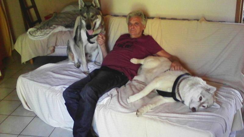 Google femelle husky 4 ans pas de chats ASSO Belgique  - Page 2 12239610